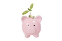 Pink piggy bank with green seedling. Pink piggy bank with a green seedling with fresh young leaves stuck into the slot in a conceptual image on white Royalty Free Stock Photo