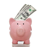 Pink piggy bank with hundred dollar bills. Pink piggy bank with 3 one hundred US dollar bills on a white background Stock Images