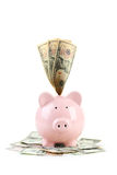 Pink piggy bank. Isolated on a white Stock Images