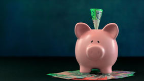 Pink Piggy bank money concept on dark blue background. With Australian cash and a one hundred dollar note inserted Stock Photos