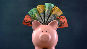 Pink Piggy bank money concept on dark blue background. Stuffed with Australian cash Royalty Free Stock Photo