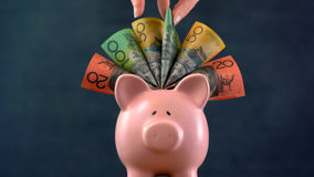Pink Piggy bank money concept on dark blue background. Stuffed with Australian cash, and female hand take one hundred dollar note Stock Photography