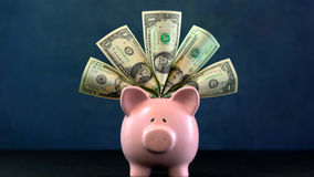 Pink Piggy bank money concept on dark blue background. Stuffed with USA cash Stock Images