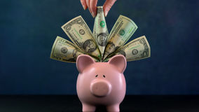 Pink Piggy bank money concept on dark blue background. Stuffed with USA cash and female hand taking one note Royalty Free Stock Photos