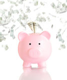 Pink piggy bank  with money rain Royalty Free Stock Photography