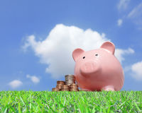 Pink piggy bank and money. A pink piggy bank and money with sky background Stock Photo