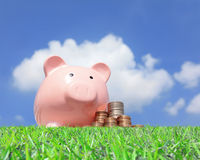 Pink piggy bank and money Royalty Free Stock Photo