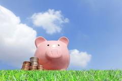 Pink piggy bank and money. A pink piggy bank and money with sky background Royalty Free Stock Photo
