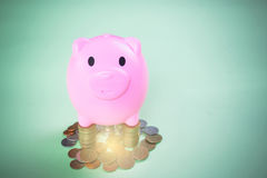 Pink Piggy bank. On green background. Piggy coin bank for money savings Royalty Free Stock Image