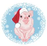 Pig in hat sit on the snowball. Pink piggy in red holiday hat sit on the blue snowball with many snowflakes Royalty Free Stock Photo