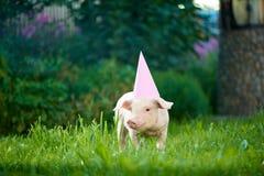 Pink piggy wearing pink festive cap, standing in garden on green grass. royalty free stock photos