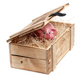 Pink piggybank in box with wood-wool Stock Photos