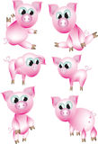 Pink pigs. Stock Photo