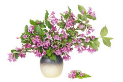 Pink  plant Royalty Free Stock Image