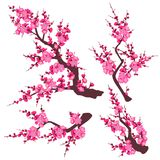 Pink Plum Blossom Branch Set. Set of flowering tree branch with pink flowers isolated on white background. Plum blossom is a symbol for spring and decoration for royalty free illustration
