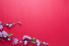 Pink plum blossom on red Stock Images