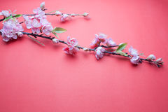 Pink plum blossom on red Royalty Free Stock Photography
