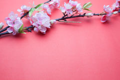 Pink plum blossom on red Royalty Free Stock Images