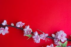 Pink plum blossom on red. Background Stock Photos