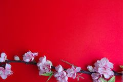 Pink plum blossom on red Stock Image