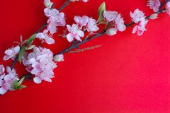 Pink plum blossom on red Stock Photo