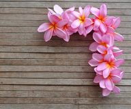 Pink plumeria border Royalty Free Stock Photos