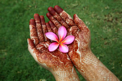 Pink plumeria flower in henna hands Royalty Free Stock Photo