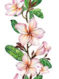 Pink plumeria flower on a twig. Border illustration. Seamless floral pattern. Isolated on white background. Watercolor painting. Hand drawn Stock Photos