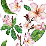 Pink plumeria flower on a twig. Seamless floral pattern. Isolated on white background. Watercolor painting. Hand drawn illustration. Can be used for fabric royalty free illustration