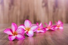 Pink plumeria flower Royalty Free Stock Image