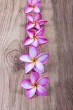 Pink plumeria flower Stock Images