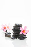 Pink Plumeria flowers and stones Royalty Free Stock Photo