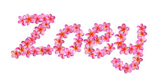 Pink Plumeria Name Zoey Royalty Free Stock Images