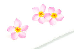 Pink Plumeria with towel Stock Photo
