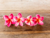 Pink Plumeria on wooden floor Royalty Free Stock Photo