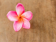 Pink Plumeria on wooden floor Stock Images