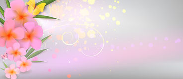Pink plumerias on abstract shiny background Royalty Free Stock Photos