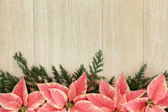 Pink Poinsettia Flower Border stock photos