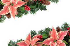 Pink Poinsettia Flower Border Stock Photo