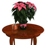 Pink Poinsettia. Stock Images