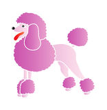 Pink poodle. Nice illustration - pink poodle isolated on white background Royalty Free Stock Photos
