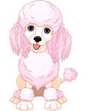 Pink poodle Royalty Free Stock Images