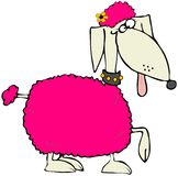 Pink Poodle Stock Photo