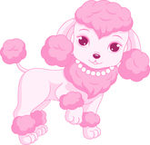 Pink poodle Royalty Free Stock Image