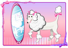 Pink poodle with mirror Royalty Free Stock Images