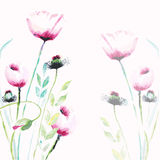 Pink Poppy flowers Stock Photography