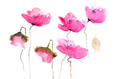 Pink poppy flowers Stock Photo