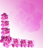Pink Postcard Royalty Free Stock Images