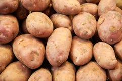 Pink potatoes closeup on market. Large pink potatoes closeup on the counter market Royalty Free Stock Photos