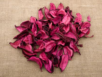 Pink potpourri Stock Photography